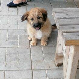 Собаки - Домашние животные, щенки, 0
