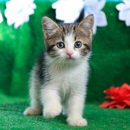Кошки - Котенок Раечка 1,5 мес, 0