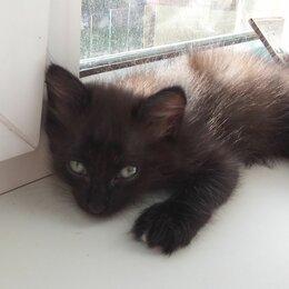Кошки - котёнок в любящую семью, 0