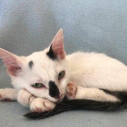 Кошки - Котёнок девочка даром, 0