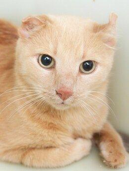 Кошки - Уникальный котик Мохаве, 0
