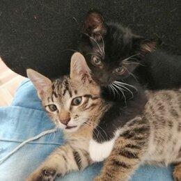 Кошки - Котята от азиатской кошки, 0