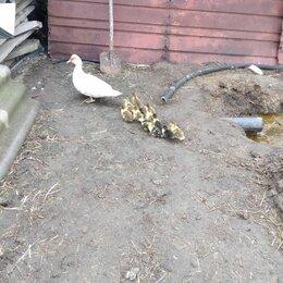 Птицы - Утки гуси, 0