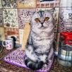 Кошки по цене 2000₽ - Кошки, фото 2