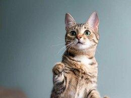 Кошки - Котенок Варя, 0