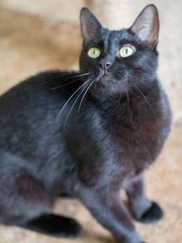 Кошки - Черная Тучка снова ишет дом, 0