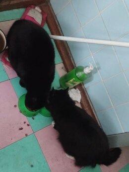 Кошки - Коты бесплатно, 0