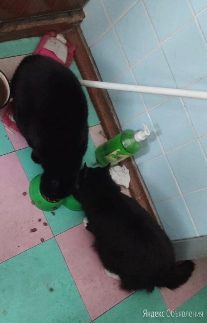 Коты бесплатно по цене даром - Кошки, фото 0