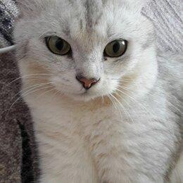 Животные - Кота в добрые руки, 0