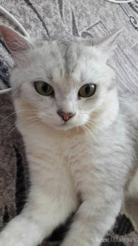 Кота в добрые руки по цене даром - Животные, фото 0
