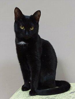 Кошки - Арабика, кошечка 9 мес., 0