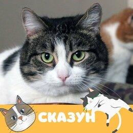 Кошки - Кот Сказун, 0