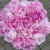 Цветы в ГОРЯЧЕМ Ключе Доставка  по цене 250₽ - Цветы, букеты, композиции, фото 5