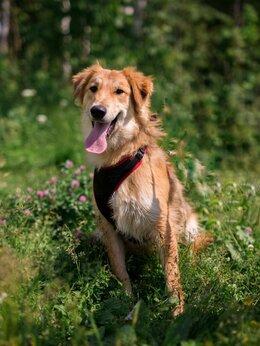 Собаки - Ияр - собака в дар, 0