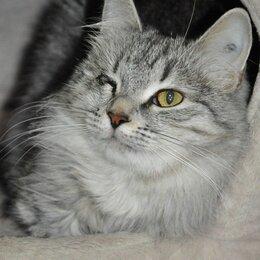 Кошки - Кошечка Тучка в самые добрые руки, 0