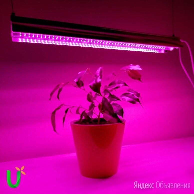 Светильник для растений фитосветильник на подоконник по цене 1950₽ - Аксессуары и средства для ухода за растениями, фото 0