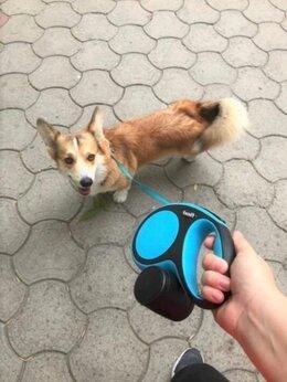 Услуги для животных - Выгул собак в ЦАО, 0