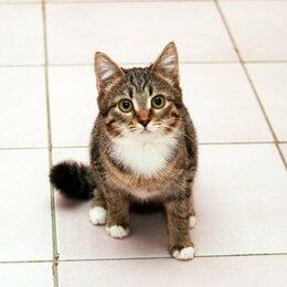 Кошки - Муся — полосатый колобочек. Котенок-подросток в…, 0