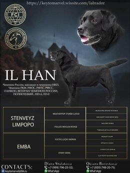 Собаки - черный кобель ждет невест, 0