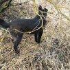 Фрида ищет хозяев по цене даром - Собаки, фото 4