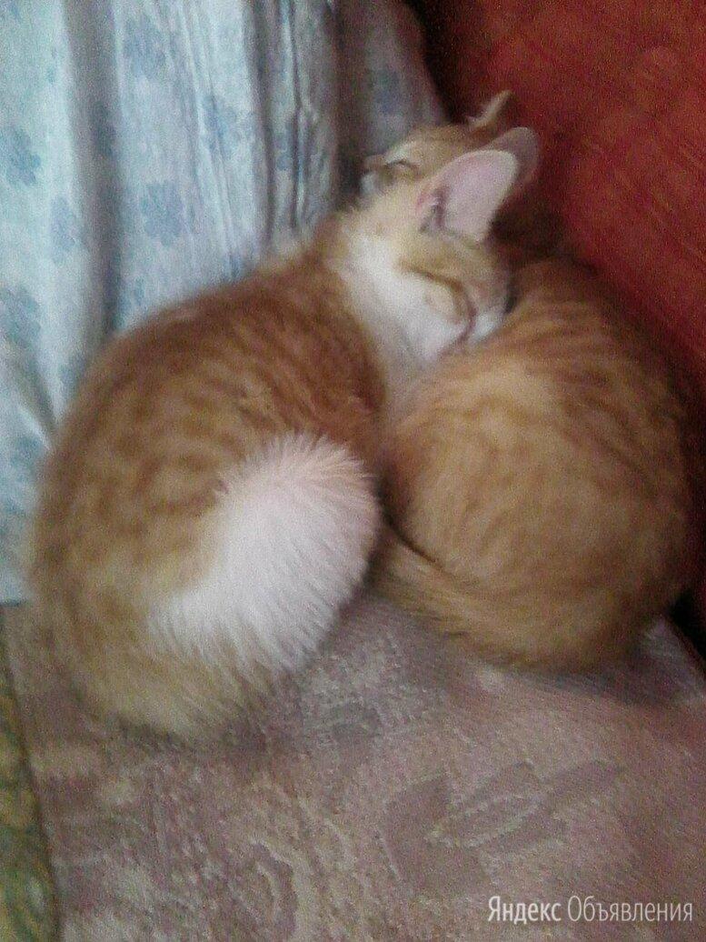 Отдам котят в хорошие руки по цене даром - Кошки, фото 0