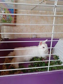 Грызуны - Карликовый кролик, 0