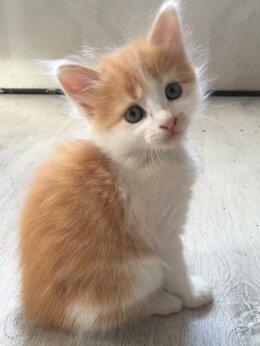 Кошки - Котята бесплатно, 0
