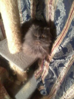 Кошки - Клубный котенок ищет дом., 0