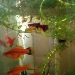 Аквариумные рыбки - Рыбки гуппи и меченосцы разные, 0