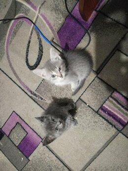 Кошки - Котята и кошечка, 0
