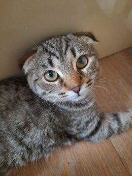 Кошки - Восточная красавица, 0