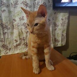 Кошки - Сфинкс , 0