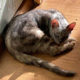 Кошки - Котик с нарушением координации, 0