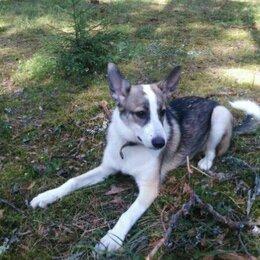 Собаки - ЛИЛА, девочка 6 месяцев, 0