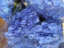 Цветы, букеты, композиции - Гортензия , 0