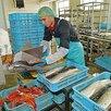 Срочно требуются рабочие на производство - Рабочие, фото 0