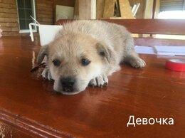 Собаки - Щенки ищут дом, 0