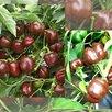 Семена Сортовых ПЕРЦЕВ для выращивания в ДОМАШНИХ условиях/БАЛКОН/Квартира по цене 50₽ - Семена, фото 9