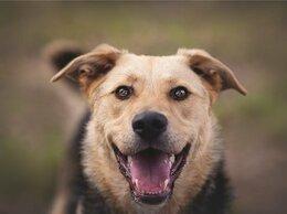 Собаки - Чудесный пёс Дэнвер в добрые руки., 0