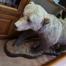 Рога, шкуры, чучела животных - Чучело медведя, 0
