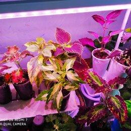 Комнатные растения - колеусы редкие и красивые сорта и виды, 0