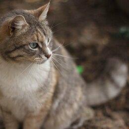 Кошки -  Трехцветная кошечка, 0