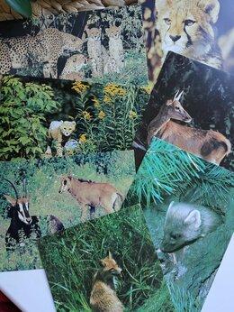 Открытки - Открытки времён СССР, с животными, 0