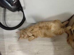 Кошки - Продажа котиков, 0