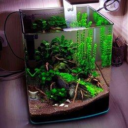 Аквариумы, террариумы, тумбы - Готовый аквариум с рыбками и живыми растениями , 0