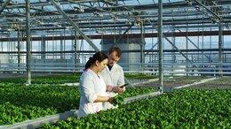 Рабочий - Сборщик грибов в сельское хозяйство, 0
