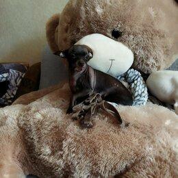 Мягкие игрушки - Плюшевый мишка, 0