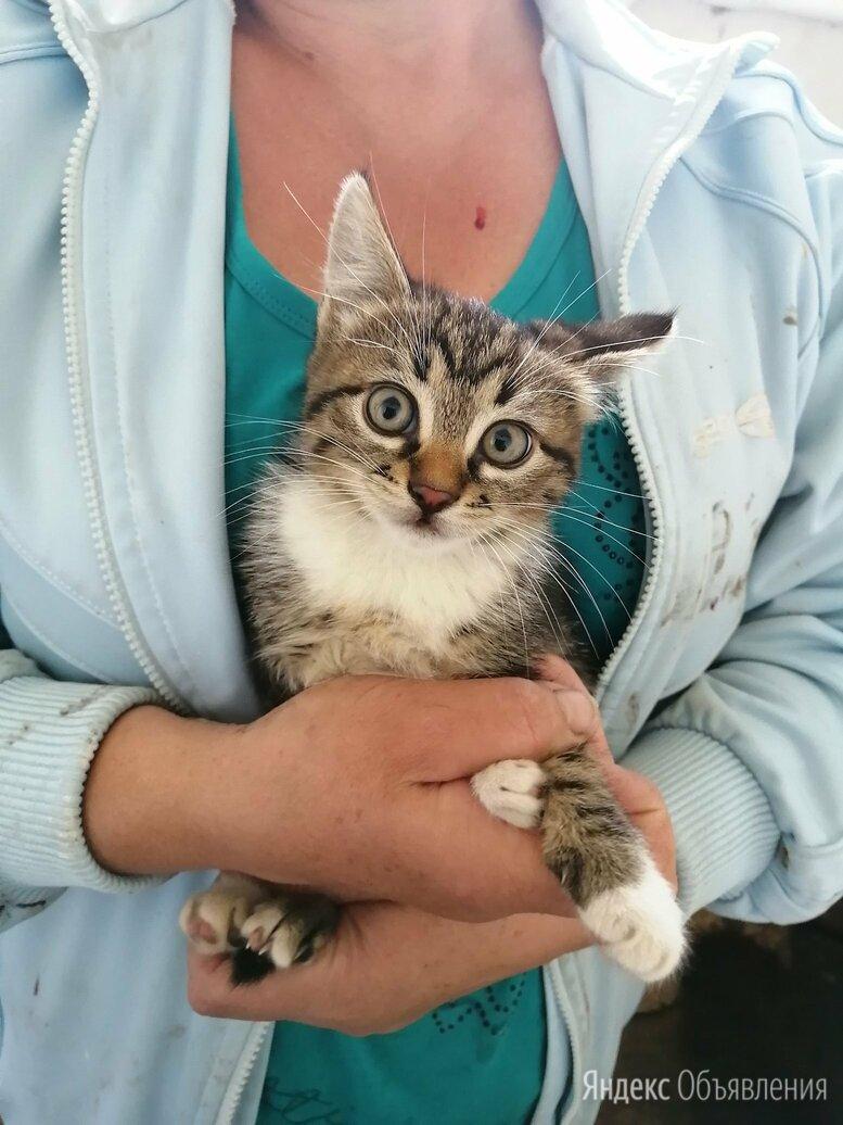 Отдадим в хорошие руки кошечку по цене даром - Кошки, фото 0
