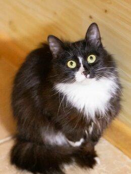 Кошки - Малышка Матильда, 7 мес., в самые заботливые руки, 0