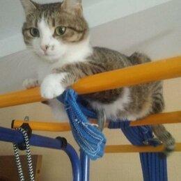 """Кошки - Ищем дом и """"добрые ручки"""" для Муси. , 0"""